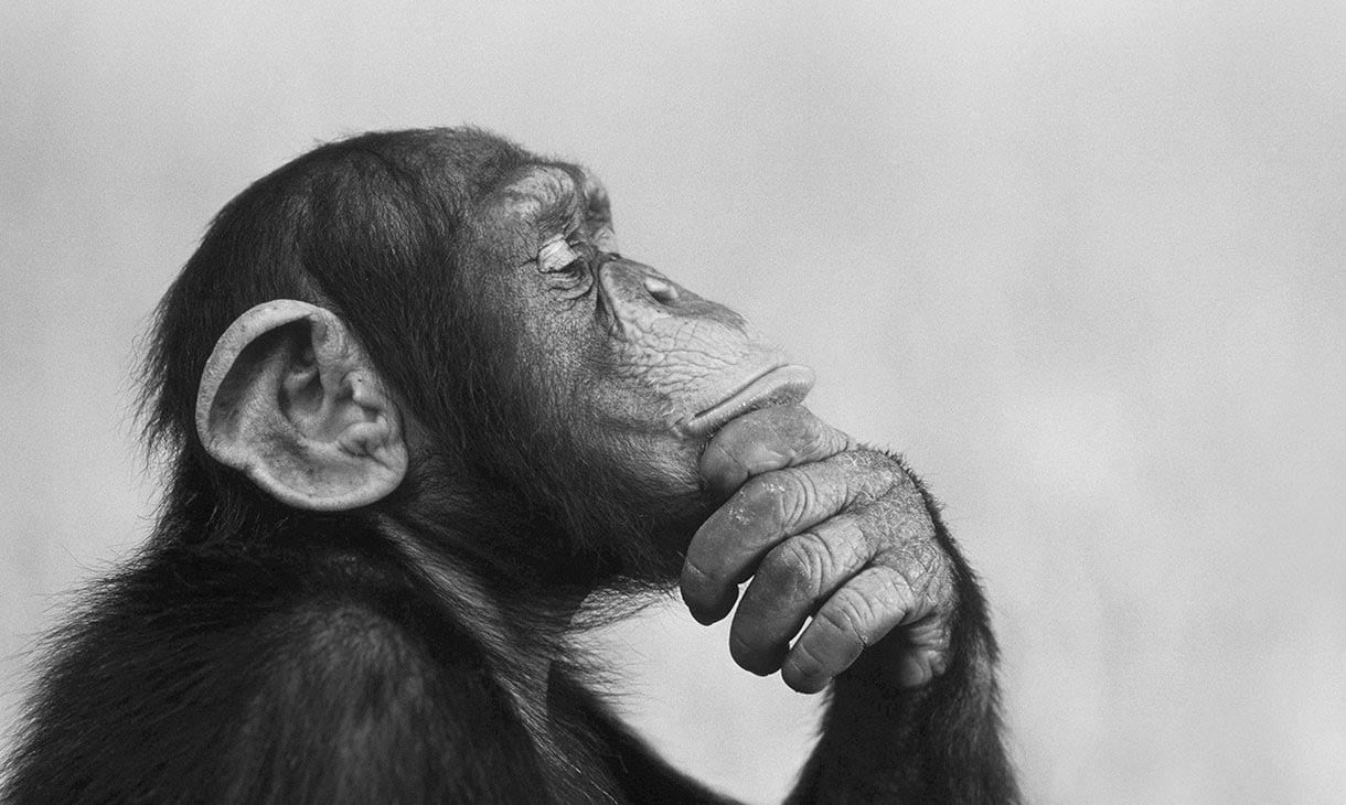 chimps outperformance in test