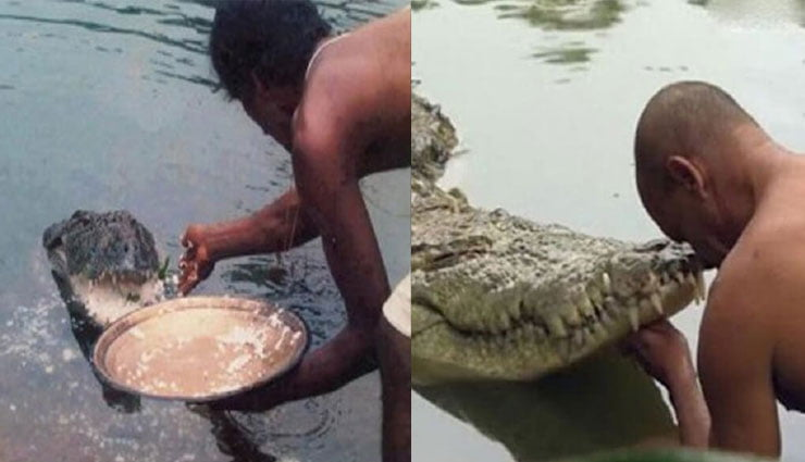 a vegetarian crocodile