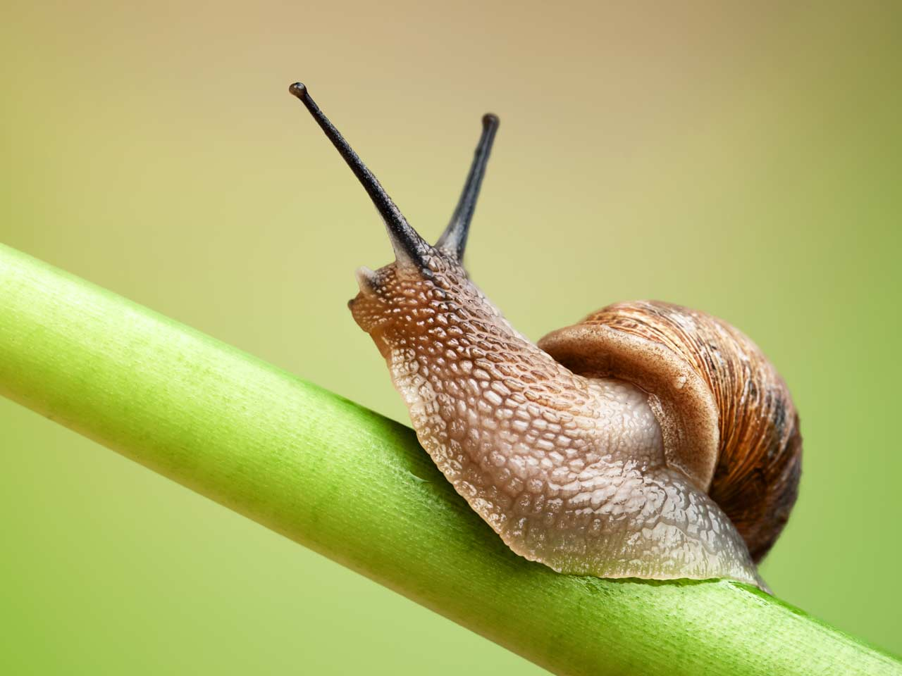 How many teeth does a snail have
