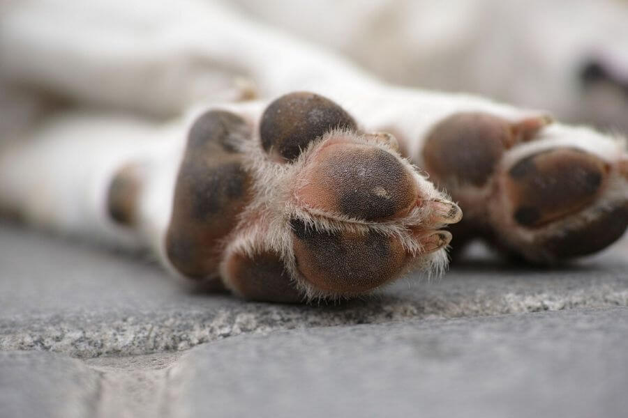 Take Care Of Its Paws